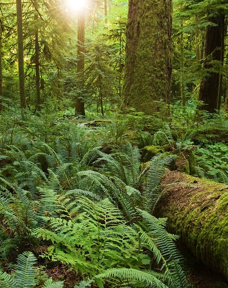 Landscape Plants Landscape Plants Pacific Northwest